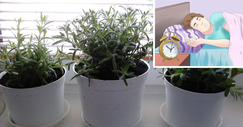 5 Houseplants That PREVENT Insomnia (and effectively purify the air in your home)