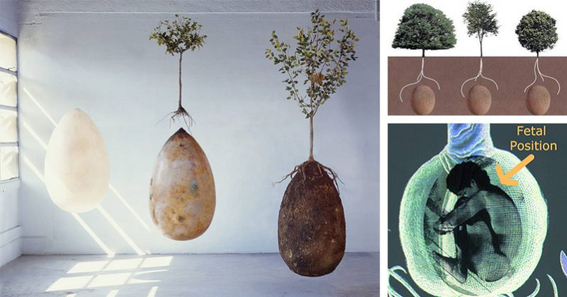 Image of No More Coffins – These Organic Burial Pods Will Turn YOU Into A TREE When You Die