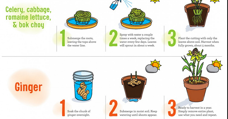 8 Foods That You Can Magically Grow at Home from Just Kitchen SCRAPS