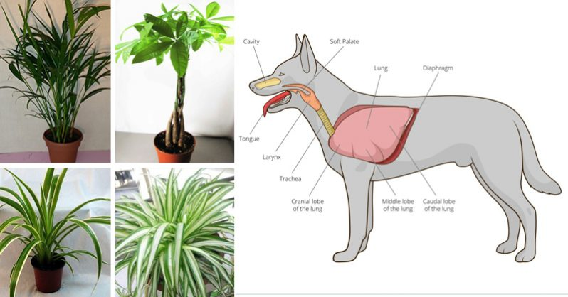 Image of These 11 Plants Purify the Air from Cancer- Causing Chemicals AND are Safe for Cats and Dogs