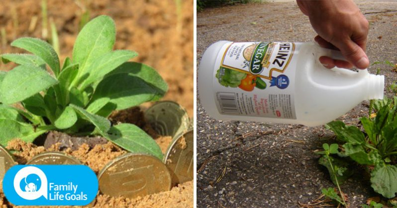 Image of 18 surprisingly effective gardening tricks that keep away pests, fight disease and improve your soil