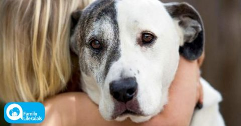 Image of Surprising Study: hugging your dog gives them STRESS and ANXIETY