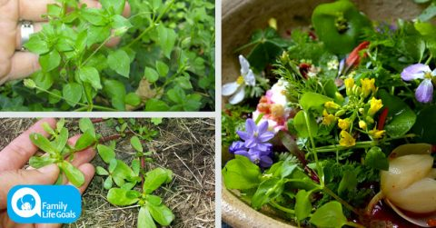Image of Stop throwing out the weeds from your garden! Add these 10 edible ones to your next salad