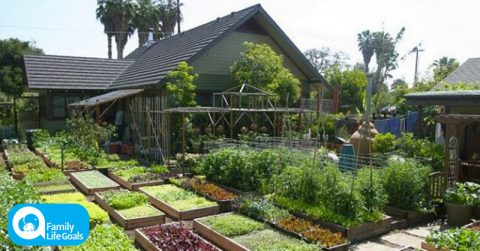 Image of Learn how this family grows 6,000 pounds of food on just 1/10th acre