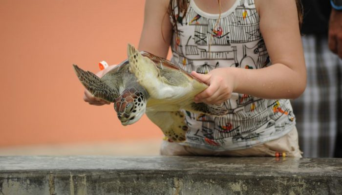 girl_holding_turtle_rs
