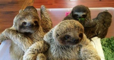 Image of Baby Sloths Having A Conversation Is The Cutest Thing On The Internet Right Now