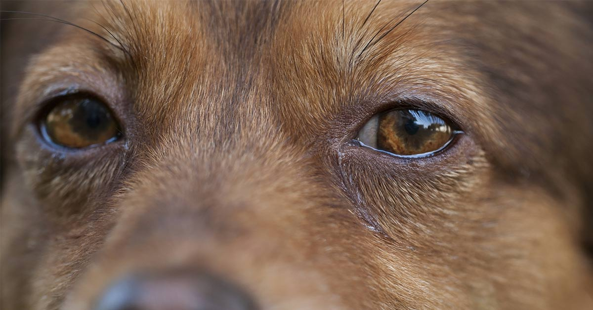 Scientists Confirm Dogs Can Really Tell If A Person Is Untrustworthy