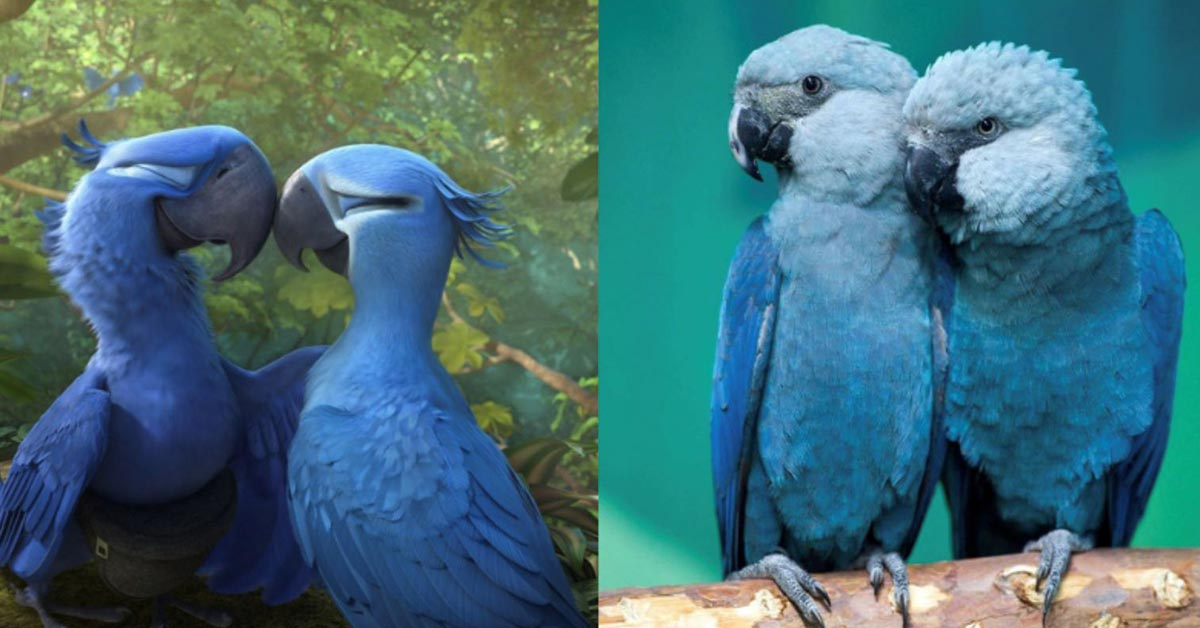 The Blue Macaw Parrot Featured in the Movie 'Rio' is Now Extinct