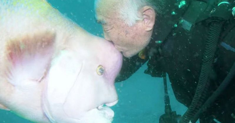 Image of For over 25 years, this Japanese diver has been the best of friends with this huge fish.
