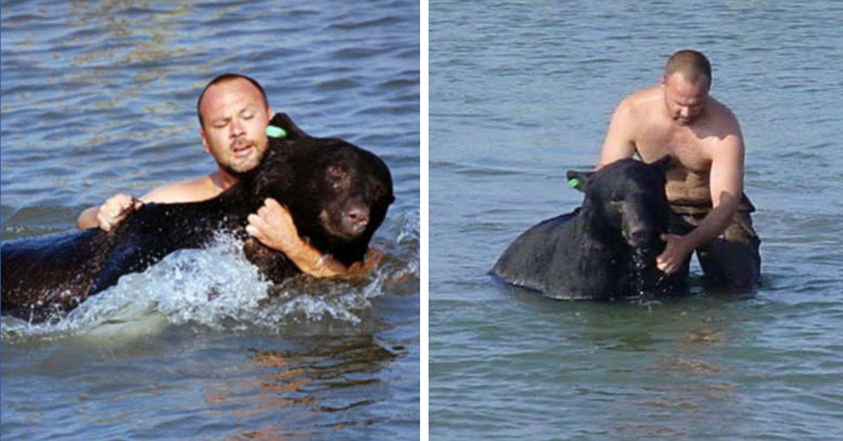 This Brave Man Saving Drowning 400-Pound Black Bear is Still One of Greatest Rescue Stories Ever