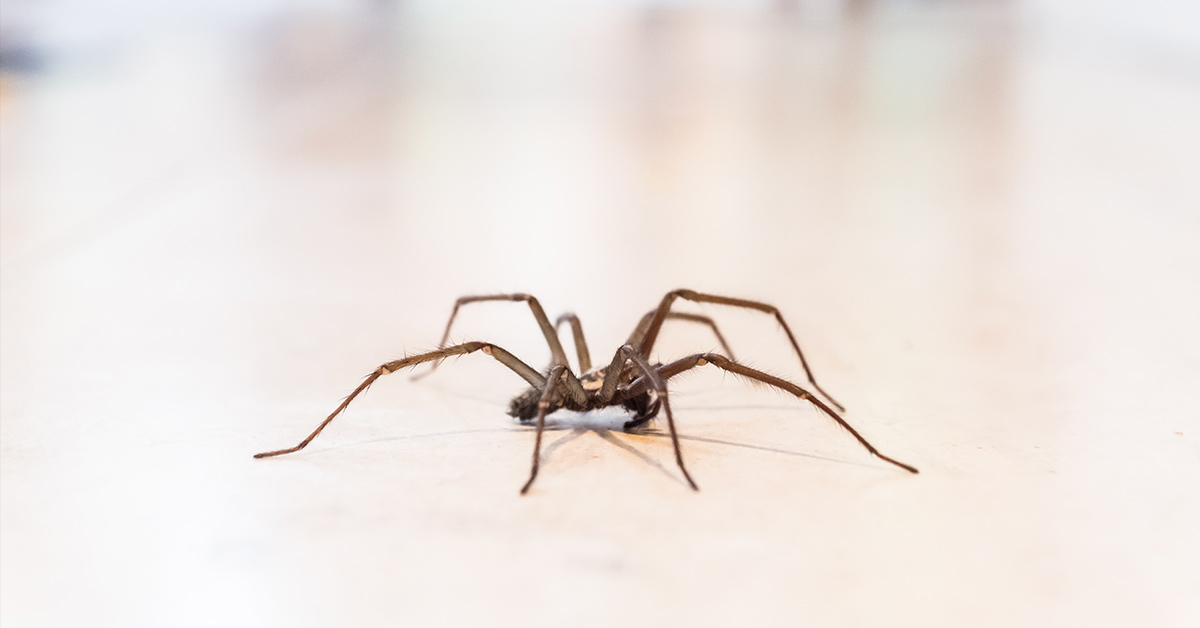 Give Your House Spider A Name and Learn to Love Them