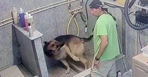 Image of Florida Dog Groomer Arrested After Breaking Service Dog's Tail Because It 'Wouldn't Sit Still'