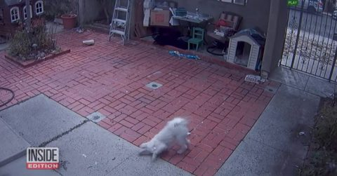 Image of CCTV Footage Shows Mail Carrier Regularly Pepper-Spraying Dog