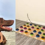 Speech-Language Pathologist Uses a Soundboard to Teach Her Dog How to Communicate and Make Short Sentences
