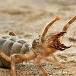 Arizona Man Finds A Strange Creature In His Home That Appears To Be Part Spider-Part Scorpion
