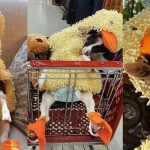 Rescue Goat That Suffers from Anxiety Only Calms Down When Put in Her Duck Costume