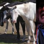 70 Horses Rescued From Slaughterhouses By Willie Nelson, And They Are All Allowed To Roam Freely On His Ranch