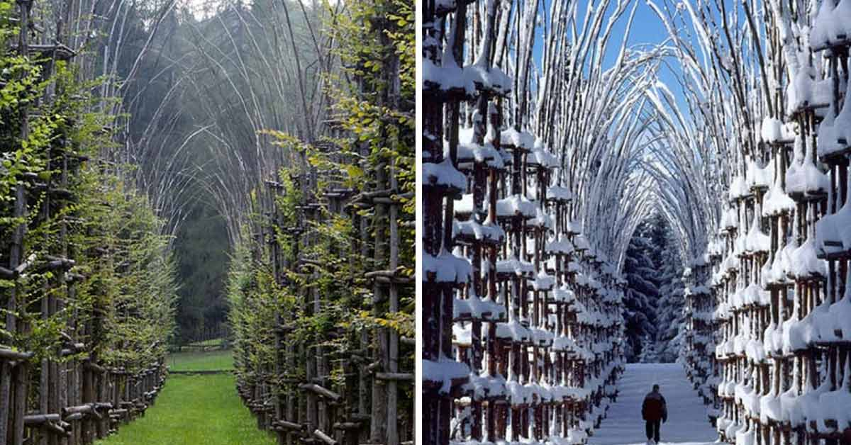 A Stunning Cathedral in Italy Is Made Of Living, Breathing Trees