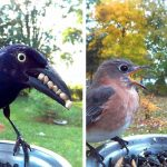 Incredible Photos of Birds Captured By A Woman Who Placed A Feeder Cam In Her Backyard