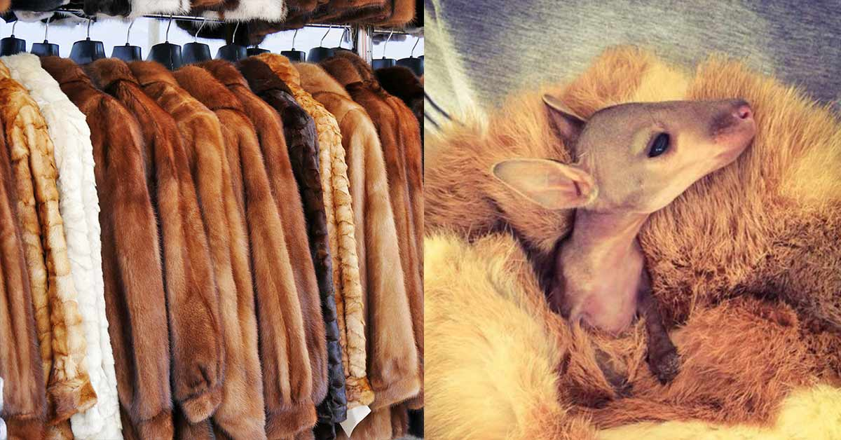 Snuggle Coats: Australian Organization Is Giving Fur Back to the Animals