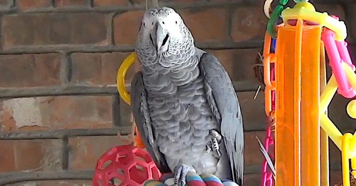 Talking Parrot Offers Encouraging Words Regarding the Coronavirus