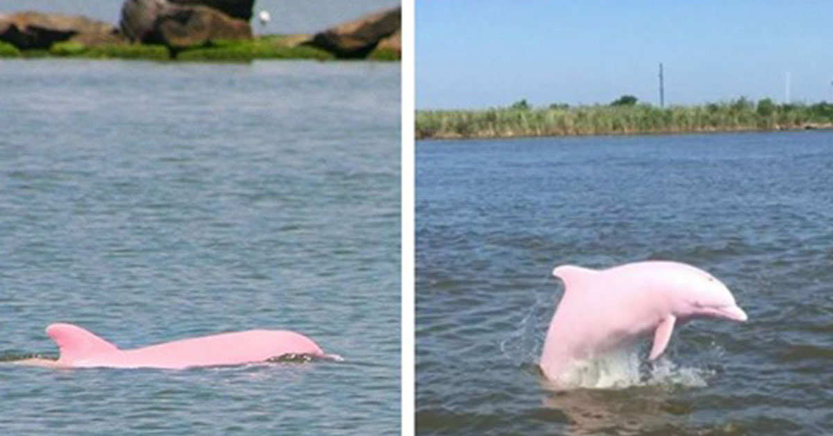 Rare Albino Dolphin Gives Birth to Lovely Pink Calf
