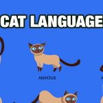 Cat-whispering: How to Find a Common Language with Your Cat