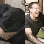 Robin Williams Made a Gorilla, Who Was Mourning Death of Her Friend, Laugh Again After 6 Months