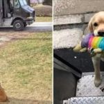 UPS Drivers Have a Facebook Group About Dogs They Meet On Their Routes, and It Will Make Your Day